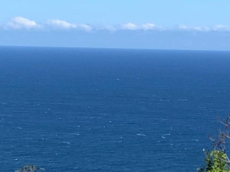 Vue imprenable sur l'océan et les baleines en hiver austral.