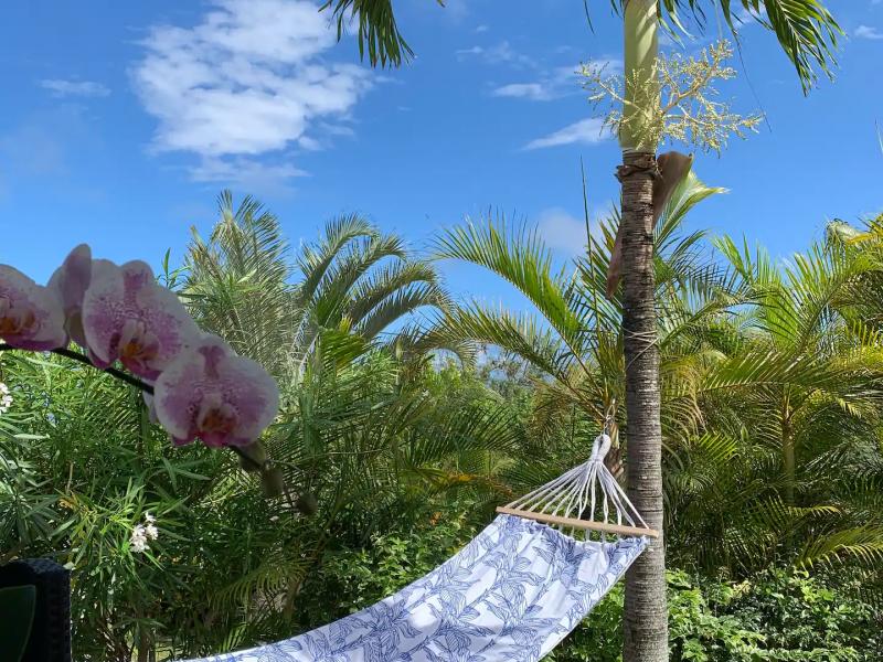 Détente avec ce hamac à disposition sous les palmiers.